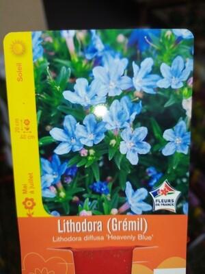LITHODORA 'HEAVENLY BLUE'