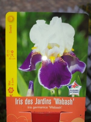 IRIS DES JARDINS 'WABASH'