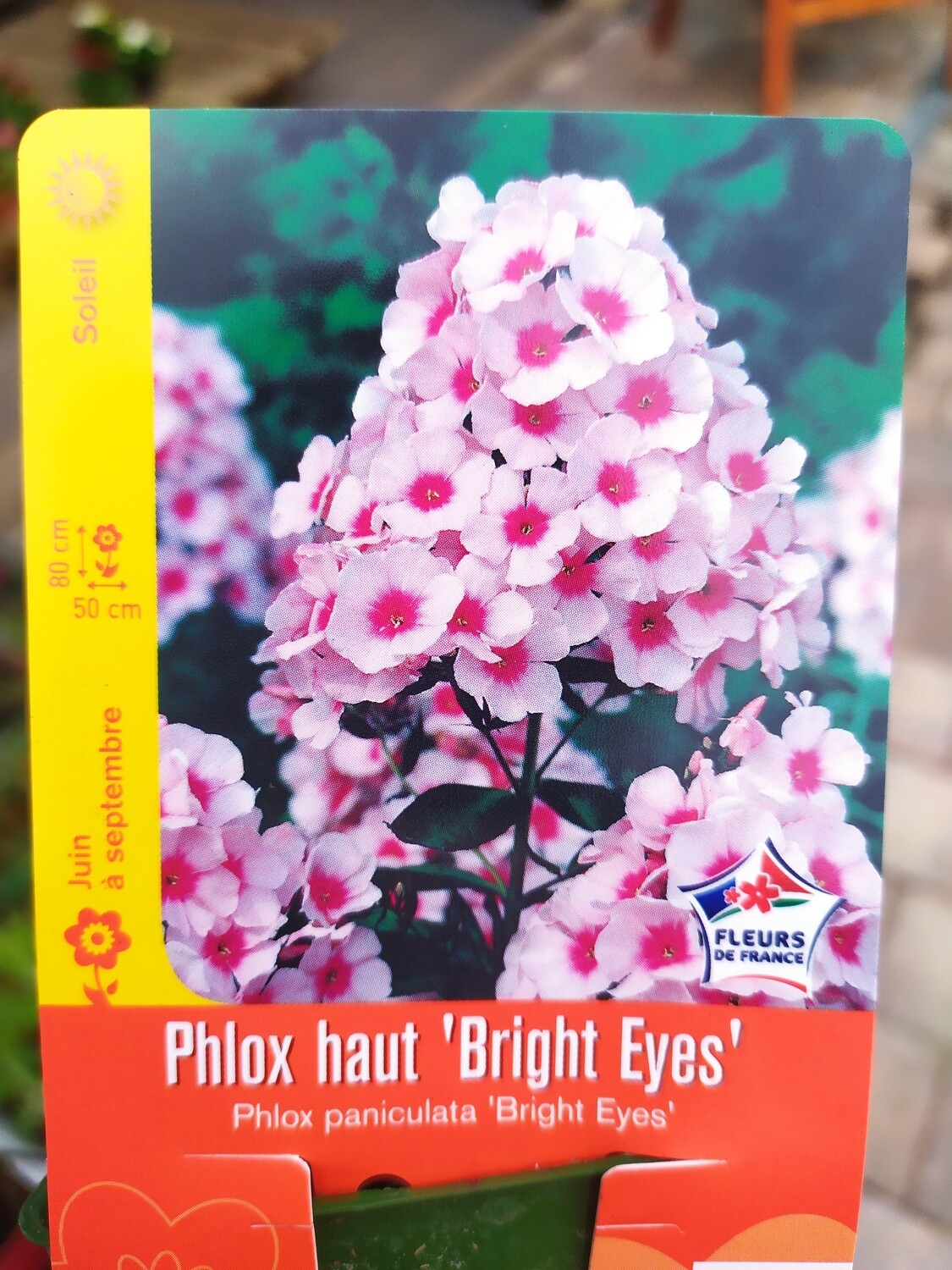 PHLOX HAUT 'BRIGHT EYES'