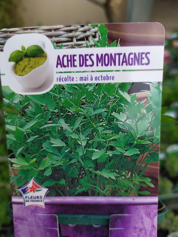 ACHE DES MONTAGNES (PLANTE MAGGI), godet 9cm