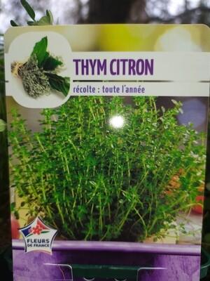THYM CITRON, godet 9cm