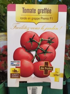 PLANT DE TOMATES GREFFE 'RONDE EN GRAPPE PREMIO'