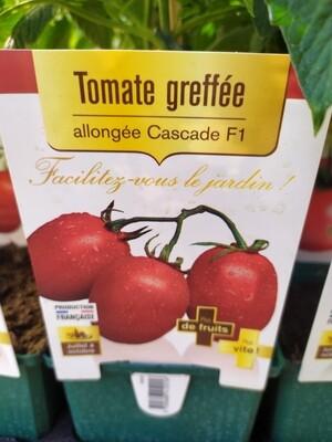 PLANT DE TOMATES GREFFE 'ALLONGEE CASCADE'