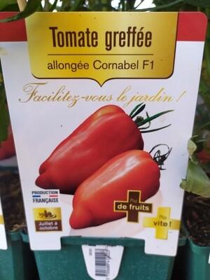 PLANT DE TOMATES GREFFE 'CORNUE DES ANDES CORNABEL'
