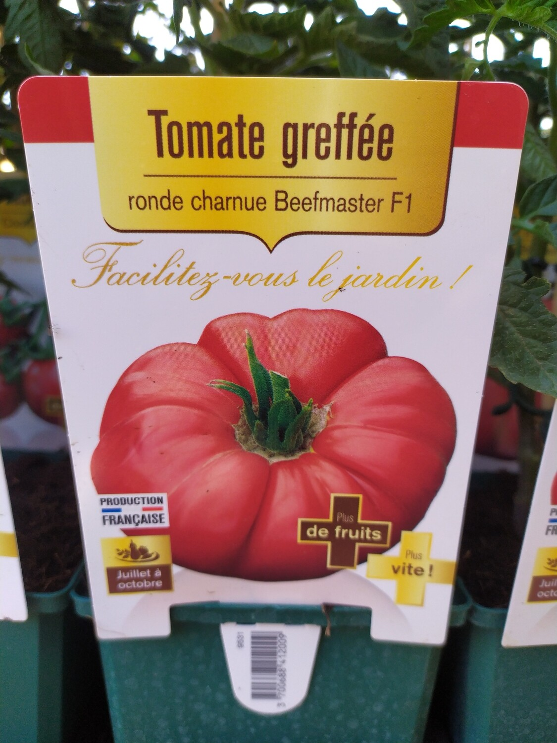 PLANT DE TOMATES GREFFE 'RONDE CHARNUE BEEFMASTER'