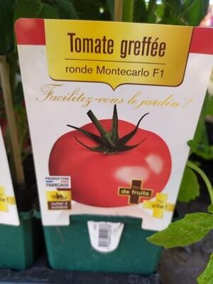 PLANT DE TOMATES GREFFE 'RONDE MONTECARLO'