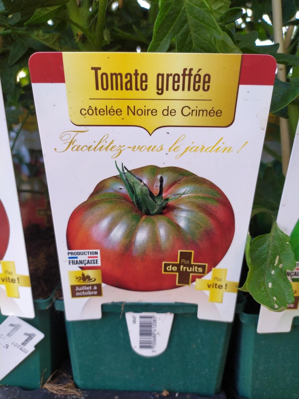 PLANT DE TOMATES GREFFE 'NOIRE DE CRIMEE'