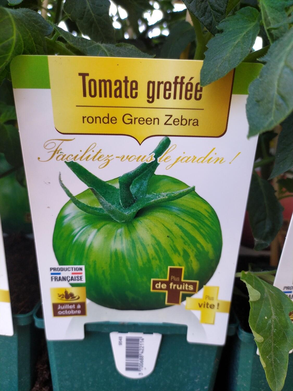 PLANT DE TOMATES GREFFE 'VERTE GREEN ZEBRA'