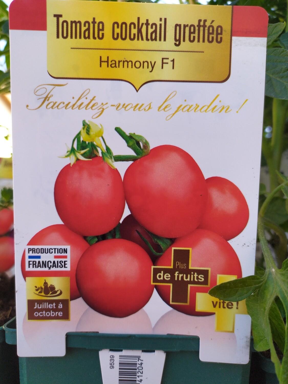 PLANT DE TOMATES COCKTAIL GREFFE 'HARMONY'