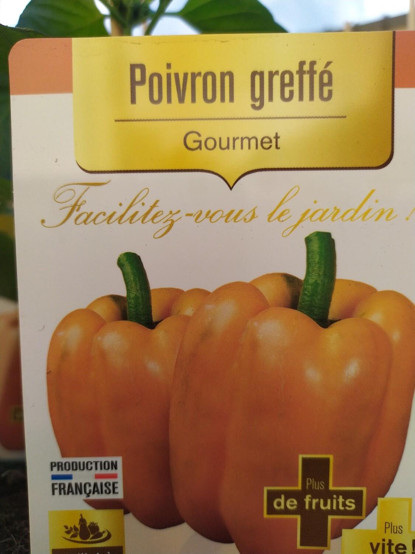 PLANT DE POIVRON ORANGE 'GOURMET'