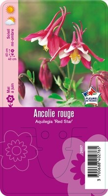 ANCOLIE ROUGE