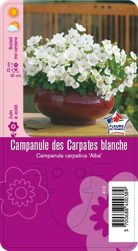 CAMPANULE DES CARPATES BLANCHE