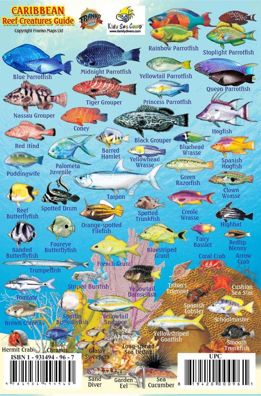 Caribbean Fish ID Card