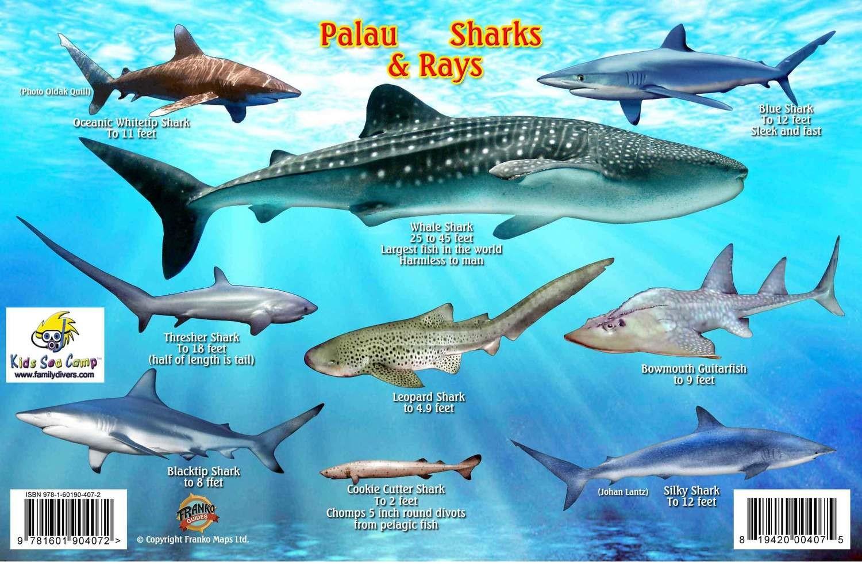 Palau: Sharks and Rays ID card