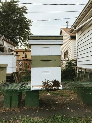 Live Working Hive
