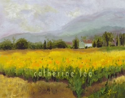 Sunflower Field Assissi