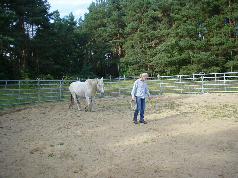 Round Pen - Kommunikations- und Beziehungstraining mit Pferden - 2 Tagesseminar