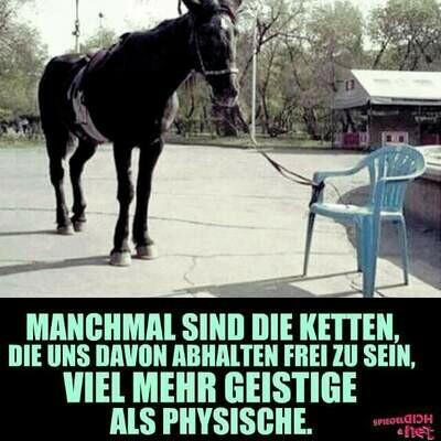 Pferde als Coach, Persönlichkeitstraining - Sonderpreis als