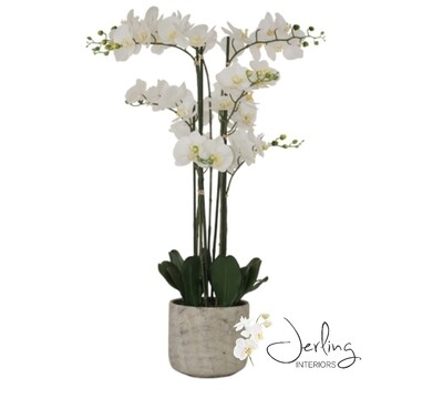 White Orchid (x large)