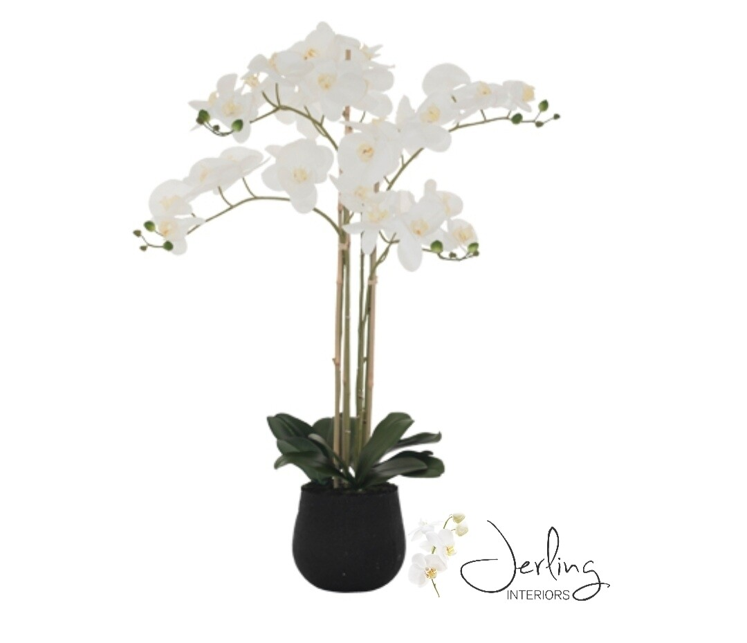 White Orchid in Black Pot (large)