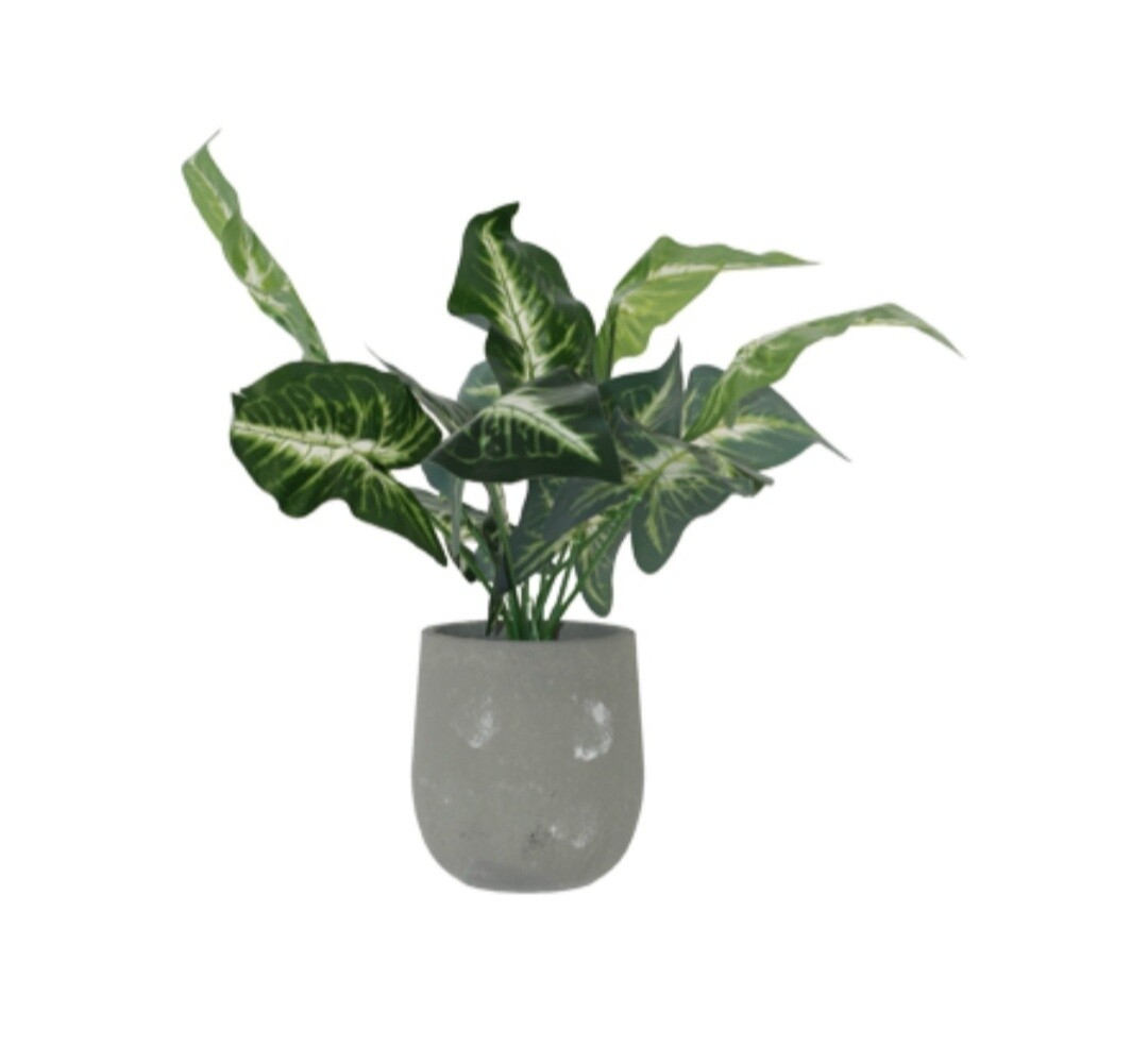 Evergreen Potted Plant