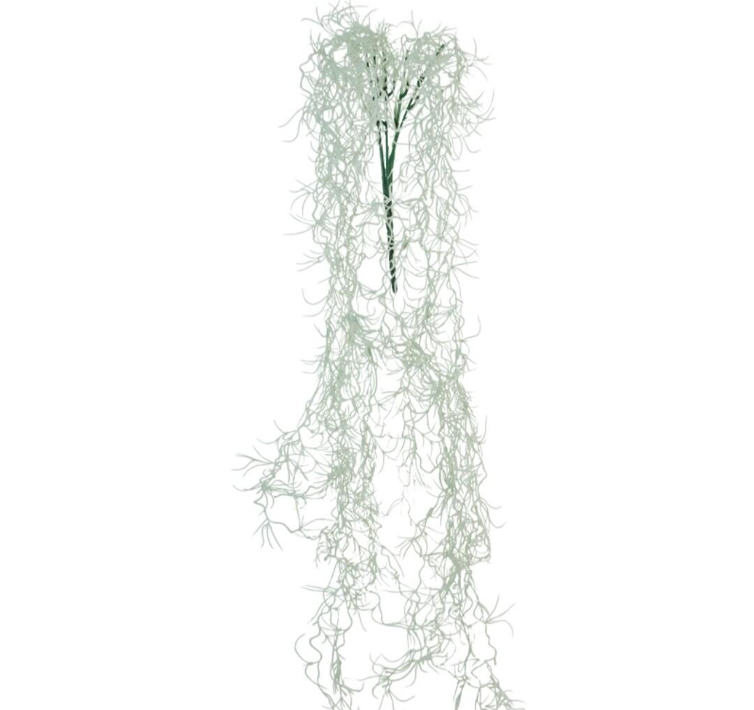 Spanish Moss String