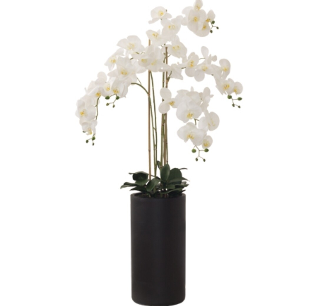XXL White Orchid in Black Pot