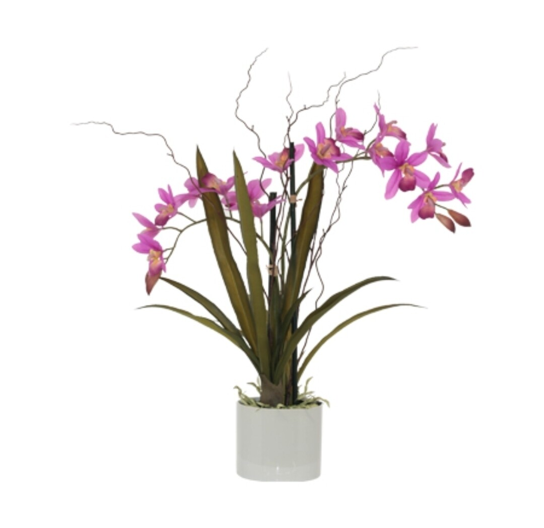 Hotpink Orchid in Pot