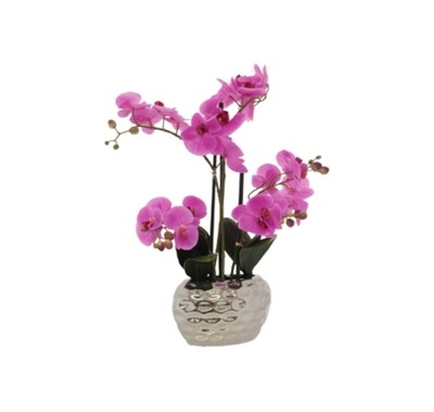 Pink Orchid in Silver Pot