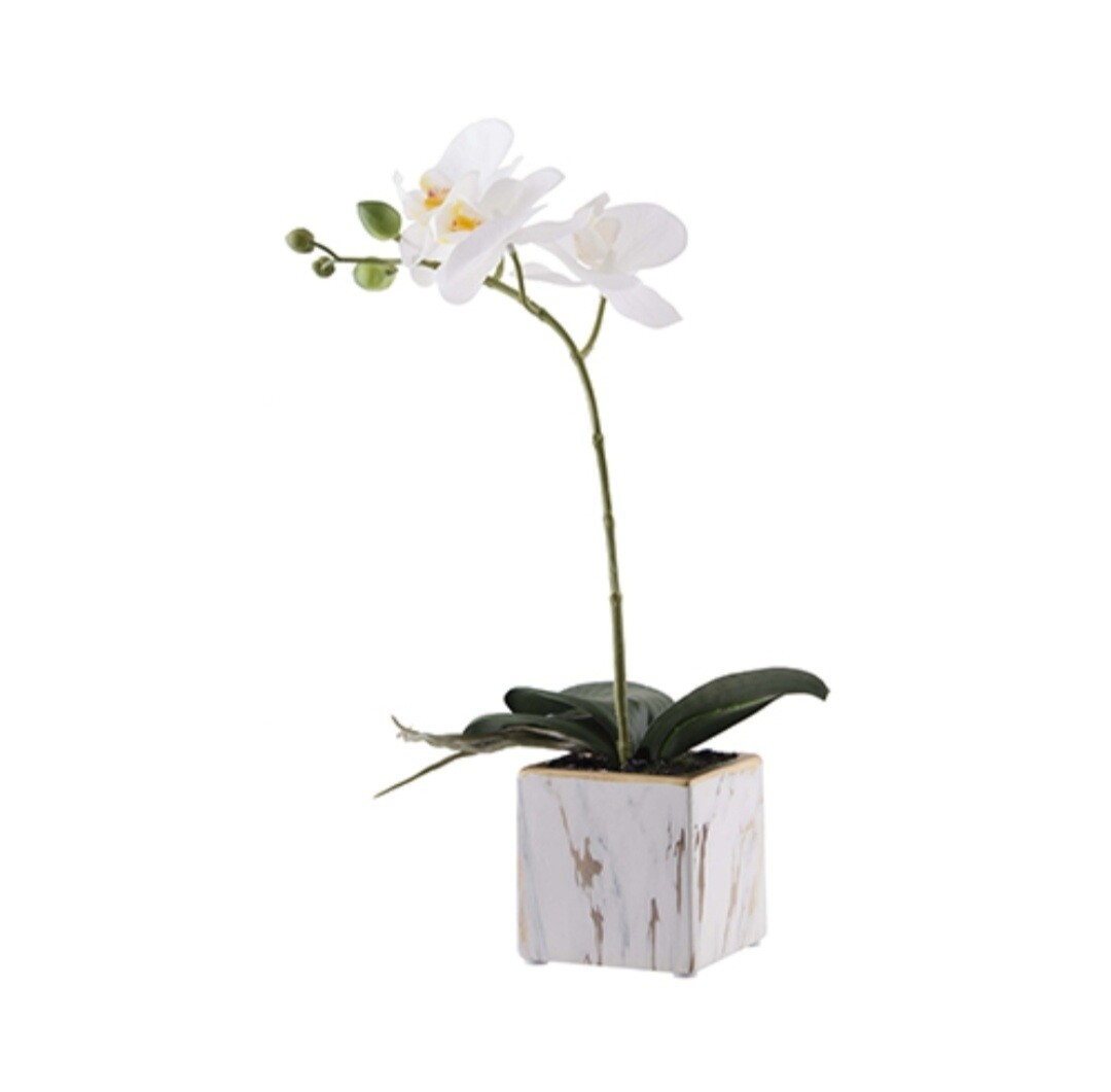 White Orchid in Marble pot