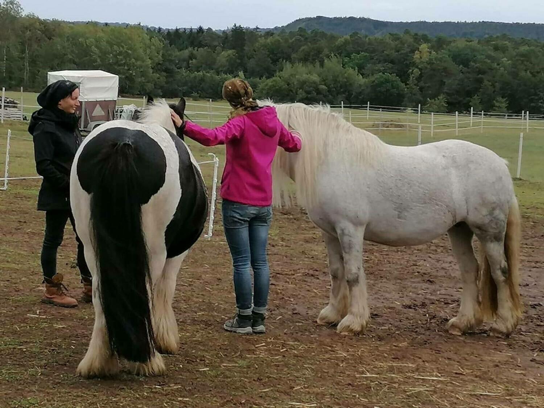 Weiterbildung: Pferdegestütztes Coaching