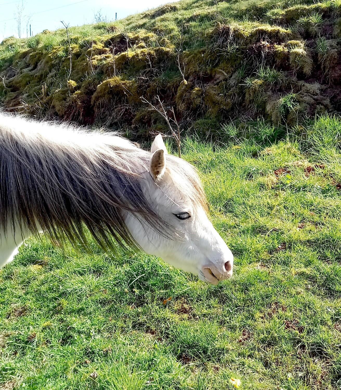 Weiterbildung: Demenztraining mit Pferden