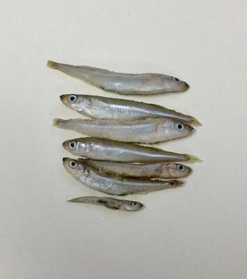 Smelt Fish Whole - 5 oz