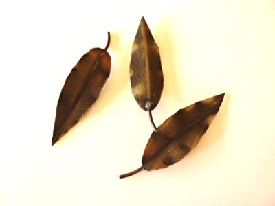 Marri Tree Leaf - Single