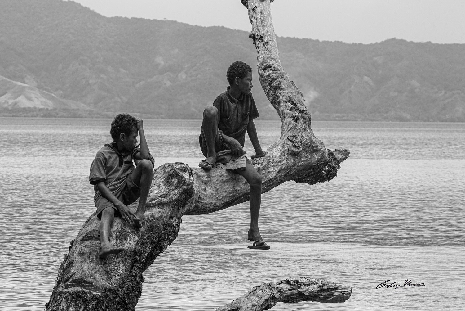 Boys in tree, Fergusson Island,  Papua New Guinea. B&W. 10x15 Acrylic