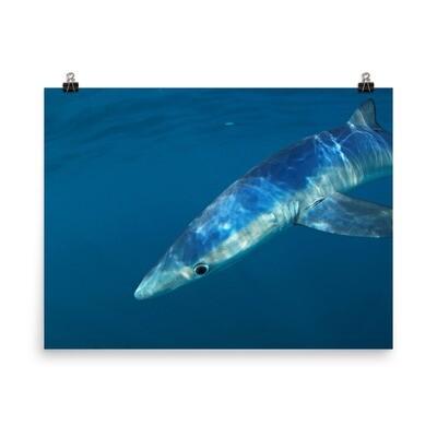 Blue Shark Poster