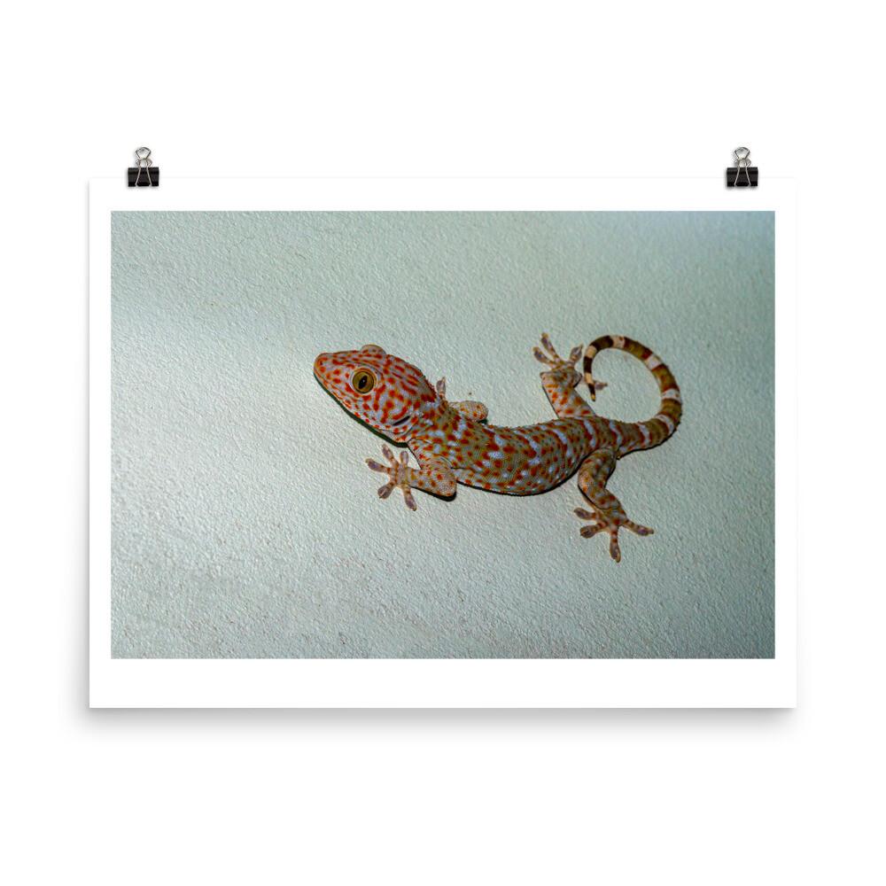Tokay gecko on green wall poster