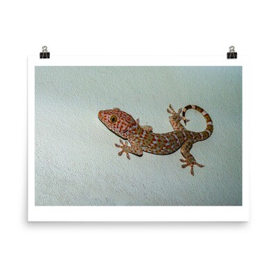Tokay gecko on green wall poster