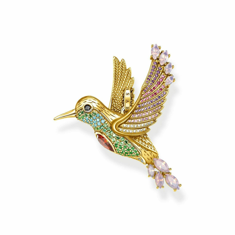 Colibri multicolore