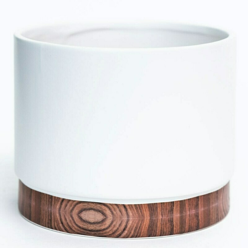 """4"""" White with wood look trim"""