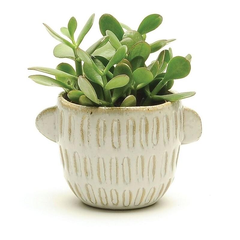 """4"""" Medium natural textured pot with handles"""