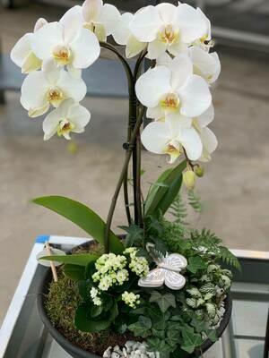 Orchideeën coupe als geschenk bij een ontbijtmand
