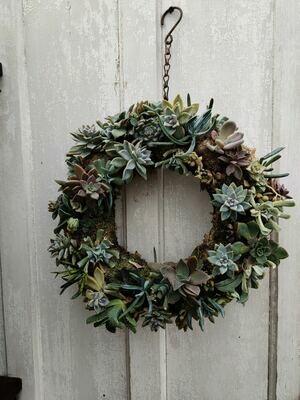"""12"""" Hanging Succulent Wreath"""