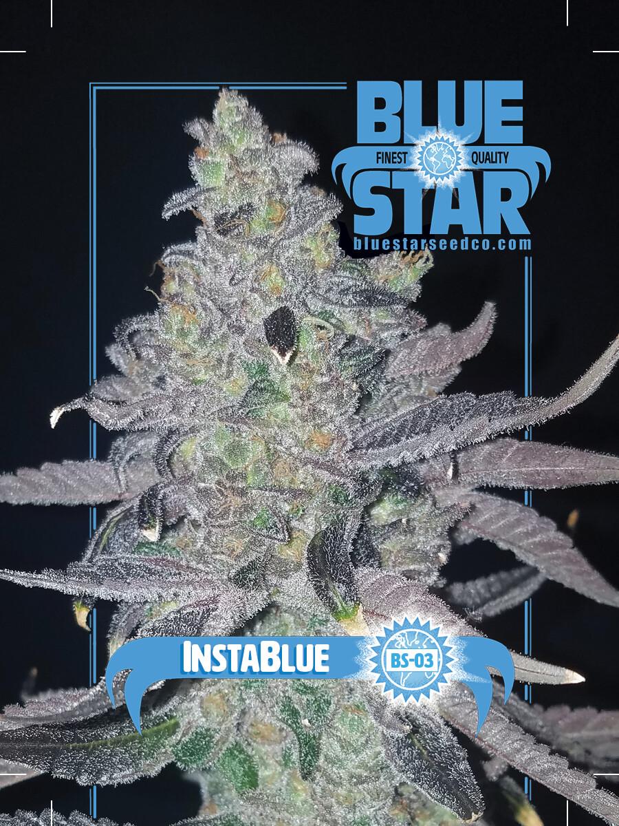 Instablue - 10 Regular Seeds - Blue Star - Plus 5 Pack FX1 X OTM Freebie