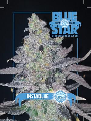 Instablue - 10 Regular Seeds - Blue Star - Plus Blue Star FREEBIE