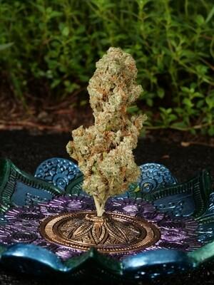 Olskoo Haze - 11 Regular Seeds - Cosmic Wisdom Seeds - Including 3pk Hawaiian Haze Freebie - Drops Tonight at Midnight