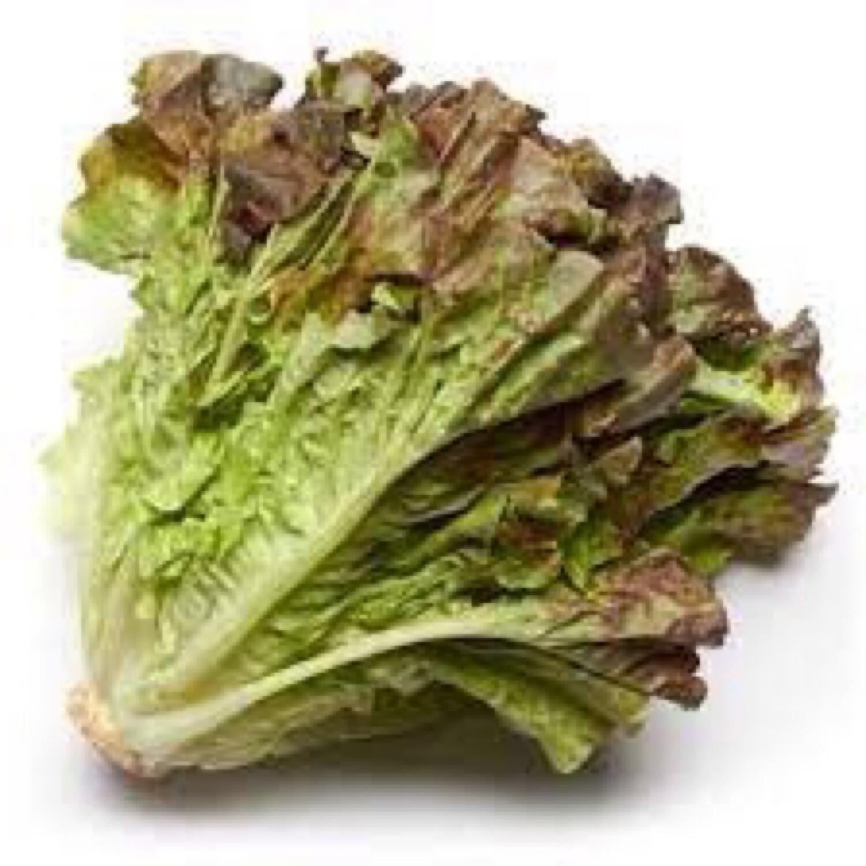 Lettuce (red leaf)