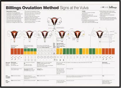 Signs at the Vulva A4