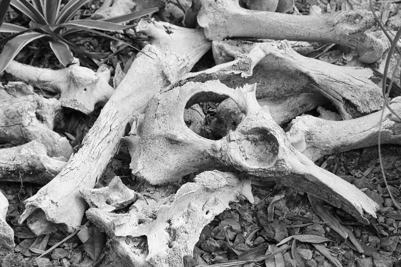 Old Bones of The Botanical Gardens