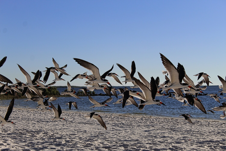 Birds of Fort Gulf Beach